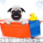 犬を洗う温度は37~38℃・シャンプー頻度は2~3週間に1回