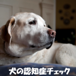 【犬の認知症チェック】夜泣き症状や寝たきりの介護