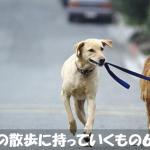 初めて犬を飼う人が犬の散歩に持っていくべき6つのもの