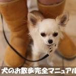 【犬の飼い方】はじめての★犬のお散歩完全マニュアル★