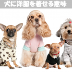 犬の洋服は防寒・熱中症・抜毛・ノミダニ・生理・ケガ保護の意味