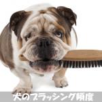 犬のブラッシング頻度は毎日!皮膚病予防に効果の出るやり方