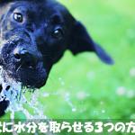 犬が水を飲まないとき水分を取らせる3つの方法