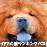 室内で飼える!ブサカワ犬種人気ランキングベスト10