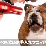初めて犬を飼った人のための毎日すべきお手入れマニュアル大全