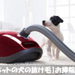掃除機で取れないカーペットについた犬の抜け毛を簡単に取る方法