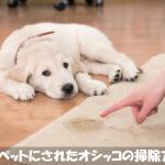 犬がカーペットにトイレをして困るなら【重曹で消臭清掃する】