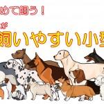 犬を初めて飼う!初心者の99%が飼いやすい小型犬